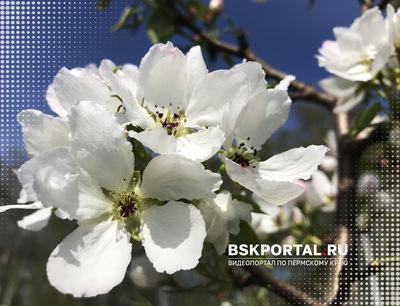 Май. Первоцветы