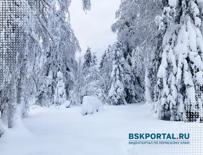Зимний лес. Каменный город